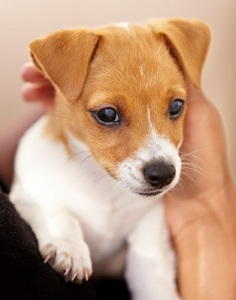 If You Are City Dweller Living In A High Rise Apartment It Might Not Be Practical For To Take Your Puppy Outside Every Few Hours While Re